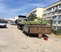 Новости Феодосии: В Феодосии привлекут к ответственности торговцев за попытку незаконно продать 7 тонн арбузов