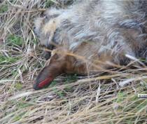 Керчане сообщают о массовом отстреле собак на металлургическом заводе