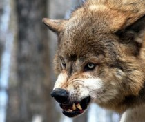 Идет охота на волков, идет охота