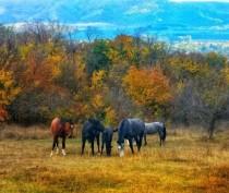 Между конными прогулками