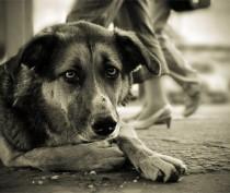 Проблему бездомных животных может решить не стерилизация, а приют