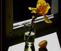 Желтый в лунном свете