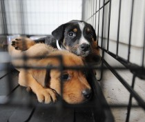 Акция по поиску хозяев для бездомных животных пройдет в Феодосии