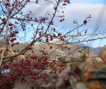 Уже скоро в Феодосию придет зима