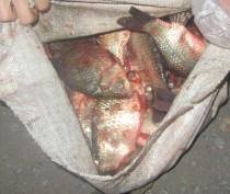 Более 130 кг изъятой у стихийщиков рыбы сожгли в Керчи