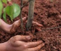 Школьники высадят парк в рамках благоустройства феодосийского села Береговое