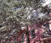 Хвойные деревья в центре Феодосии сколько им лет?