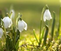 В Феодосии весна!